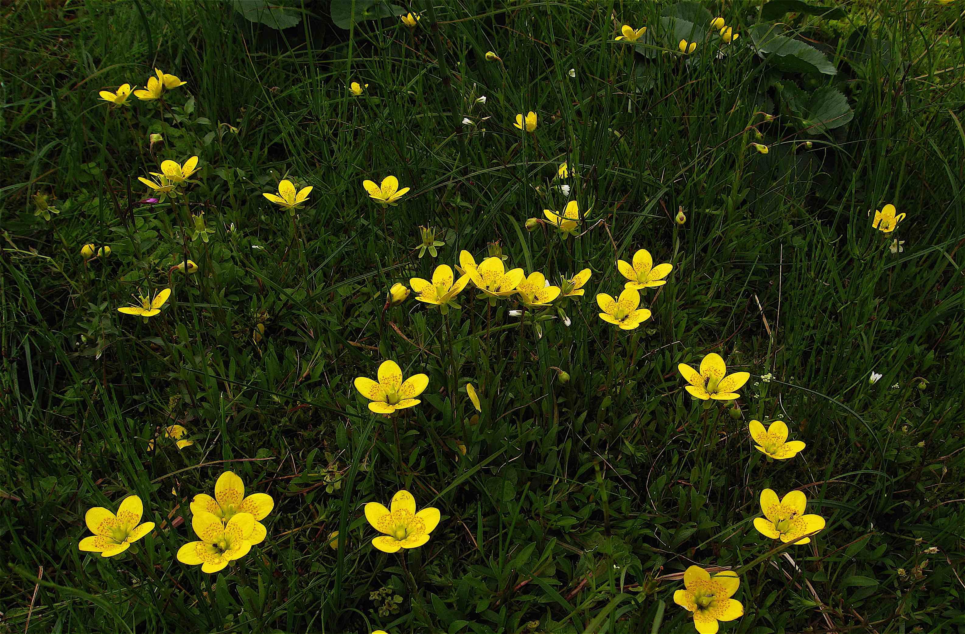 Landscapes Flora Of Cumbria Cumbria Botany